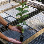 Tree Seedling Page_html_m397fe